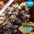 Orion-seeds-Legendary-Skunk-Feminise-nasiona-marihuany-new.jpg