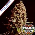 Polish-Grow-Polish-Easy-Skunk-Fast-Version-m.jpg