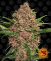 Barneys-Farm-purple-punch-auto-nasiona-cannabis-sklep.jpg