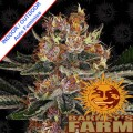 Barneys-Farm-purple-punch-auto-nasiona-cannabis-sklep-n.jpg