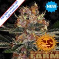 Barneys-Farm-purple-punch-auto-nasiona-cannabis-sklep-nnew.jpg