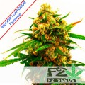 F2seeds-Strawberry-Kush-Fast-Version-feminise-szybkie-nasiona-n.jpg