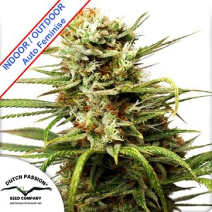 Auto White Widow Feminise