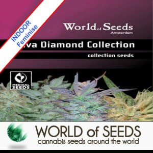 Sativa Diamond Collection Feminise