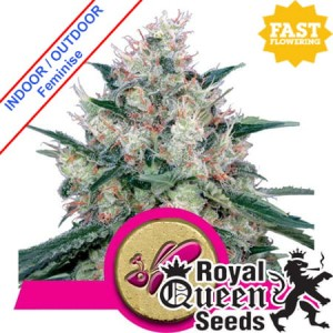 Royal Caramel Fast Version Feminise