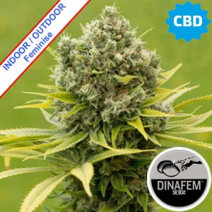 Dinamed CBD Plus Feminise