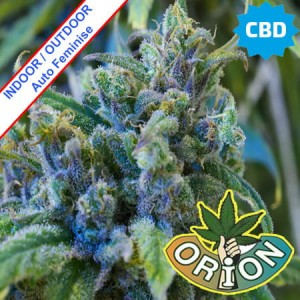 Crystal Medical CBD Auto Feminise