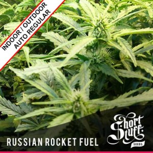 Russian Rocket Fuel Auto Regular