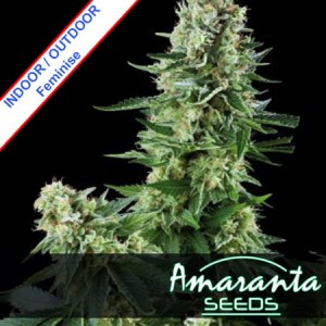 Amaranta White Widow Feminise