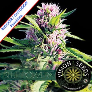 Blue Power Feminise