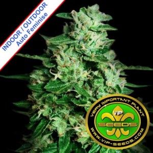 Northern Delights Auto Feminise