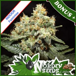 White Widow Feminise