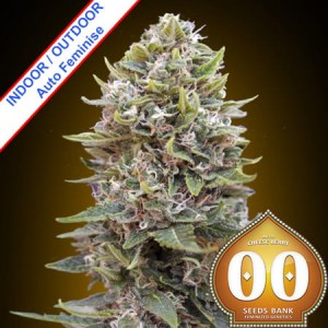 Auto Cheese Berry Feminise