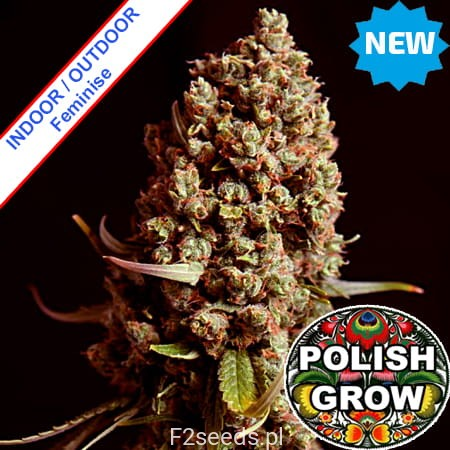 Polish-Grow-Polish-Easy-Skunk-Fast-Version-new.jpg